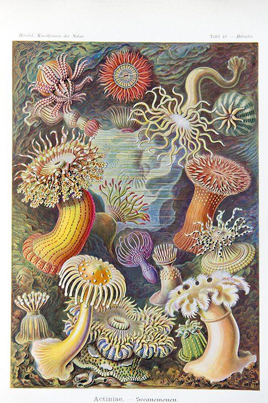 marine art ernst haeckel corridor8